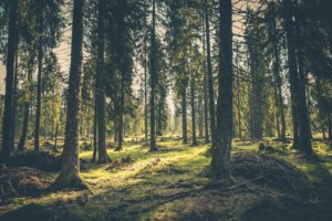 Holzbau Unterrainer - Holz als Baustoff