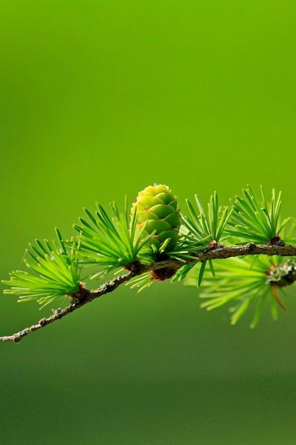 Holzbau Unterrainer - Nature